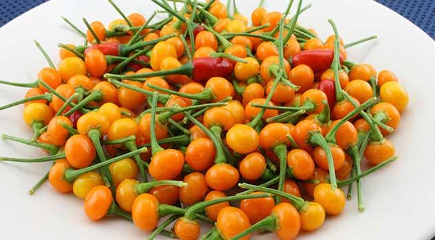 most expensive Chilli the World Aji Charapita 10 seeds